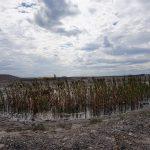 Vodní život na odvalu bývalého černouhelného dolu