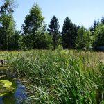 Tesák: Jak se zarostlá nádrž stane přírodní památkou