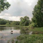 Radimovice u Tábora: Mlynářka, Čtverák nebo Krajánek v rybniční kaskádě plné tajemství