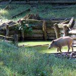 Vypravte se do Klopotovského údolí za jelenem Matějem!