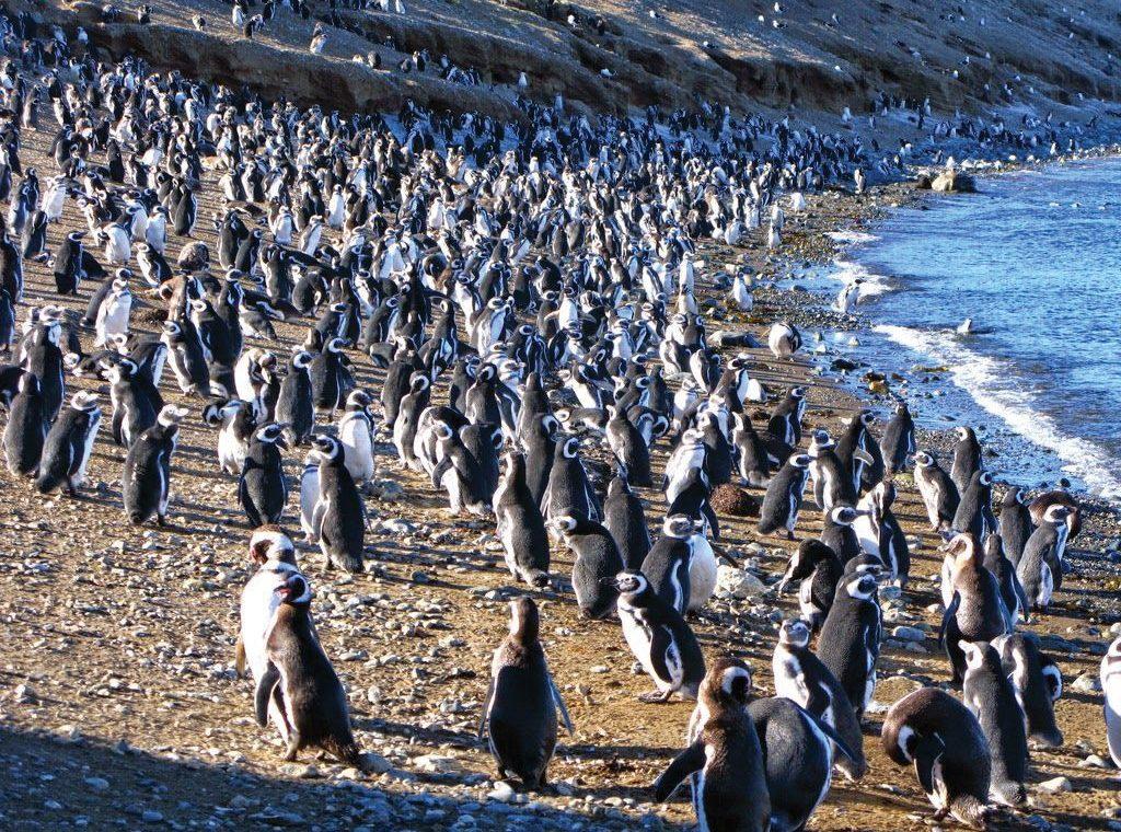 Tucnaci-Los_Pinguinos