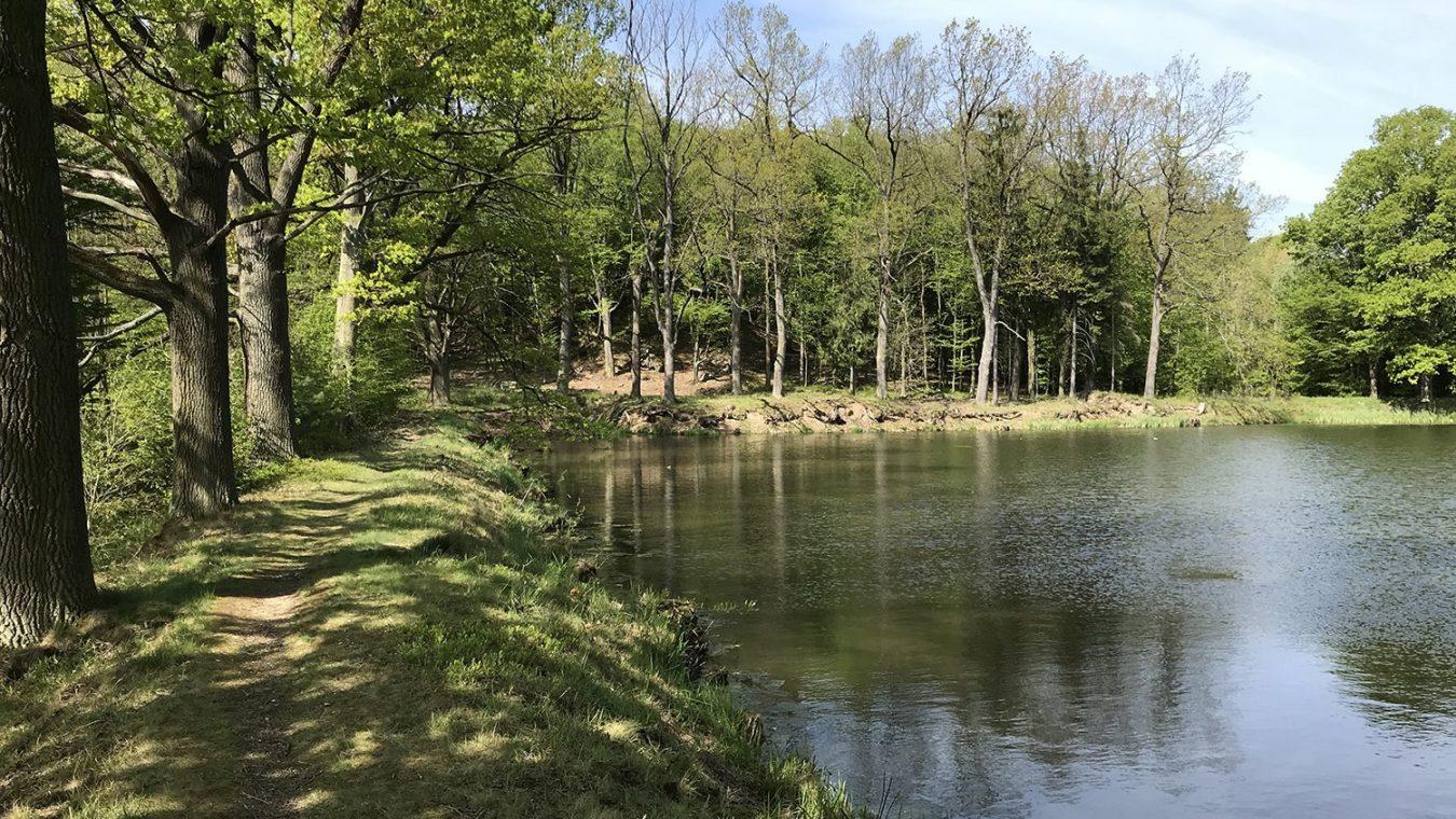 Kochánovické-rybníky-7