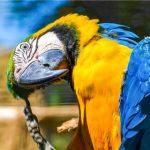 Botanická zahrada UK na Slupi zve na exotické papoušky