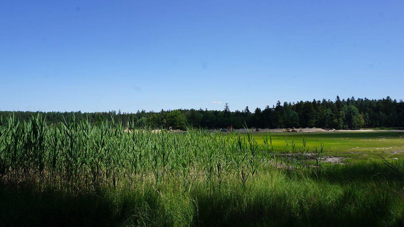 Velký-pařezitý-rybník