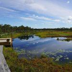 Fascinující Země bažin na jihu Estonska