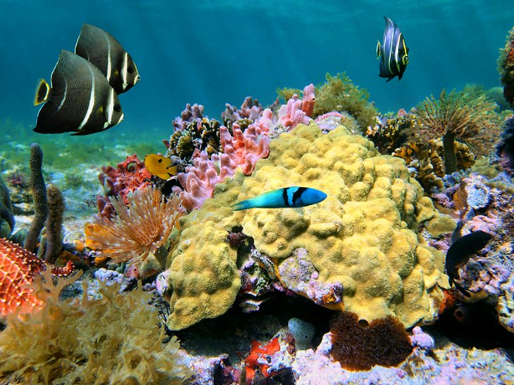 coral-and-fish-dominica