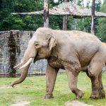Navštivte výukové centrum v ostravské zoo!