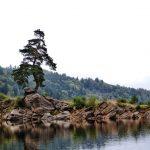 Nejkrásnější evropský strom roste na Víru