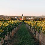 Za vínem do Dolního Rakouska. Zažijte středoevropskou vinařskou kulturu jinak