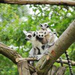 Zoologické zahrady se znovu otevírají návštěvníkům